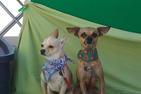 small-dogs-posingE49B7C44-8B2A-9780-611A-6145F0E3DFF4.jpg